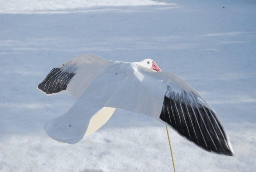 Flapping Snow Goose Decoys