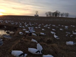 Snow Goose Hunting Trip Planning