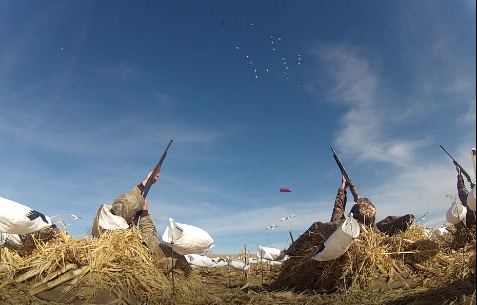 Performance Calls hunters shooting geese